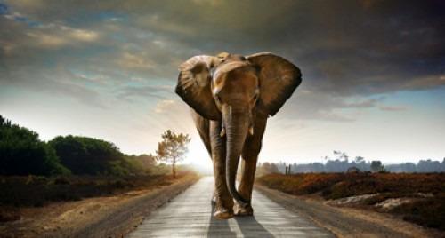 Reconnaître « l'éléphant » : la communication en soins palliatifs